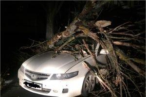 Дерево раздавило две машины в Брянске