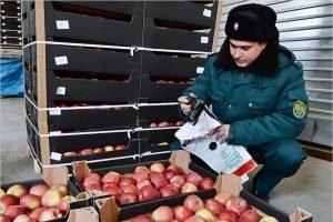 Четверть нелегальной санкционной продукции из Белоруссии в Россию идёт через Брянскую область