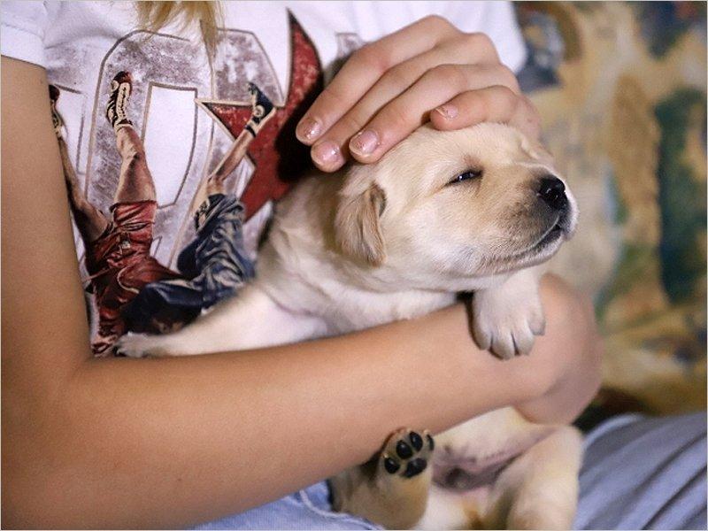 В Клинцах на свет появились восемь «президентских» щенков