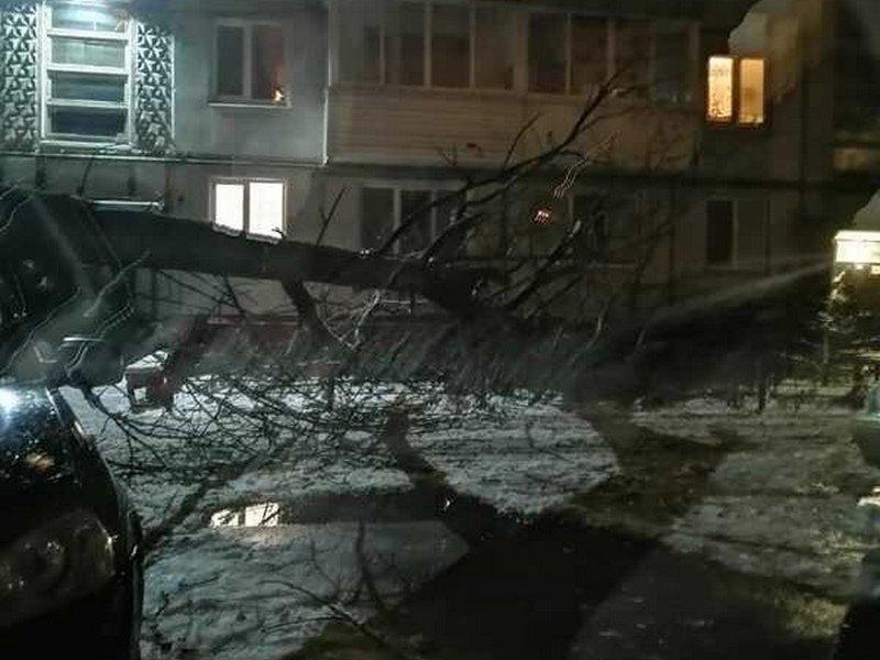 Под тяжестью снега в Брянске упало дерево: повреждена машина и балконы