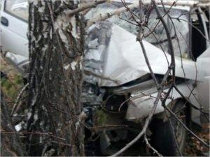 Смертельное ДТП под Клинцами: 19-летний водитель врезался в дерево