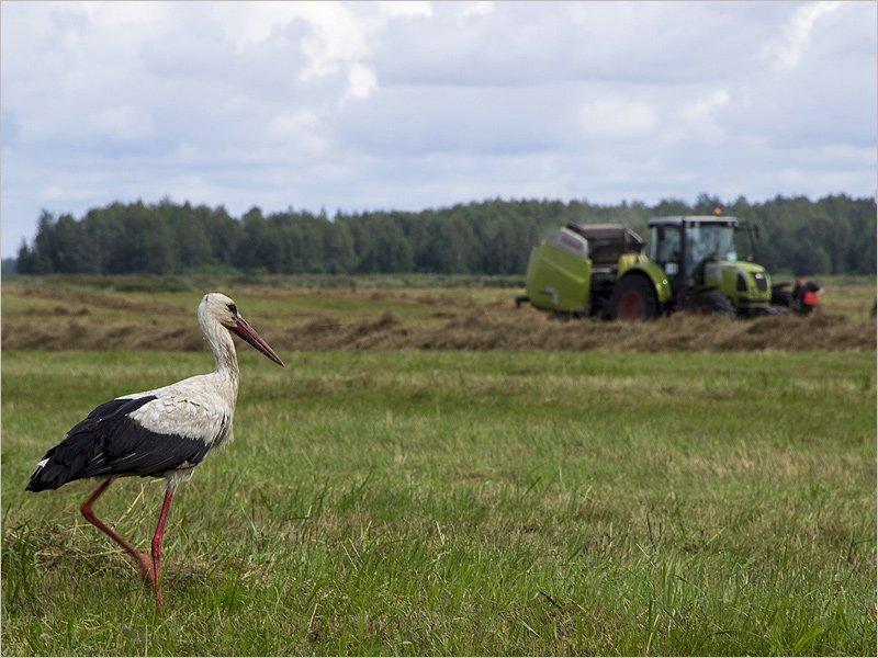 «Мираторг» увеличит посевные площади для «мясного проекта» до 660 тысяч га