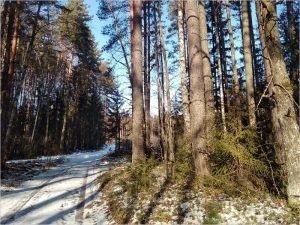 Гидрометцентр прогнозирует в России сверхраннюю весну