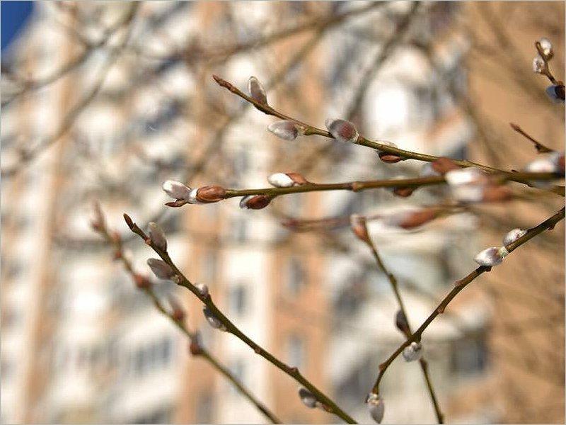 В Брянске два дня подряд погода бьёт температурные рекорды