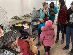 «Забери меня домой»: в Брянске проходит традиционная выставка-раздача в честь Дня кошки
