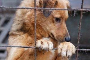 Торги по проектированию брянского приюта для бездомных животных пройдут в конце месяца – Макаров