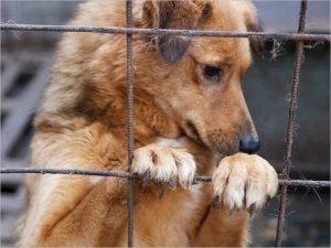 Торги по проектированию брянского приюта для бездомных животных пройдут в конце месяца — Макаров