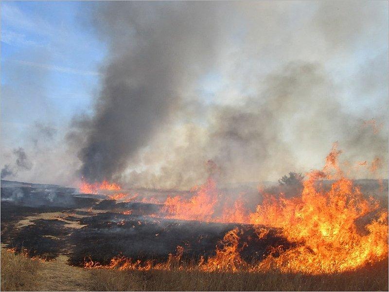 Пал сухой травы едва не сжёг деревню в Трубчевском районе