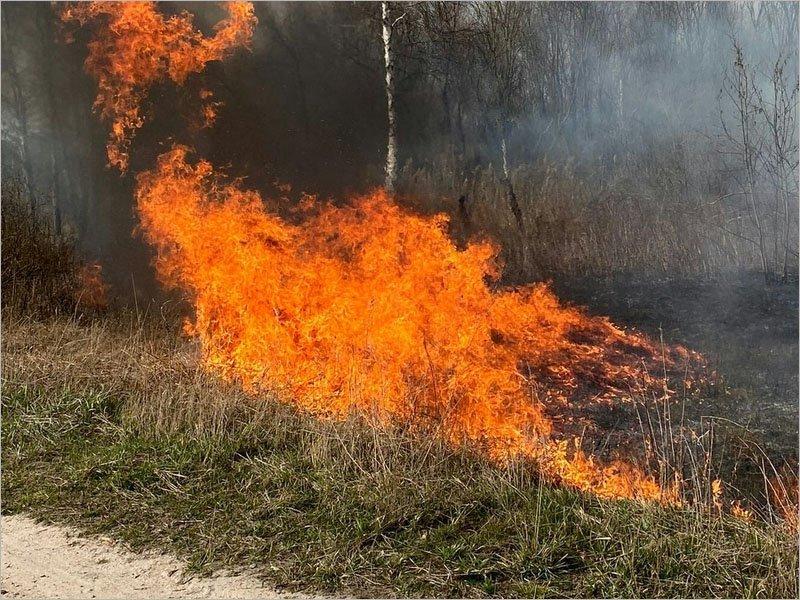 За сутки брянские пожарные получили более 200 вызовов на тушение травяных палов