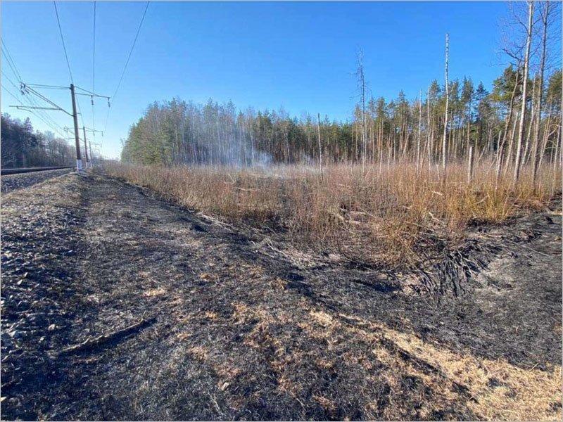 За день в Брянской области произошло четыре лесных пожара