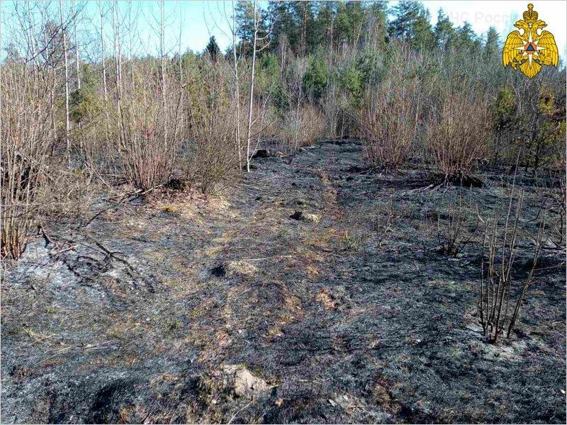 Под Брянском потушен очередной лесной пожар