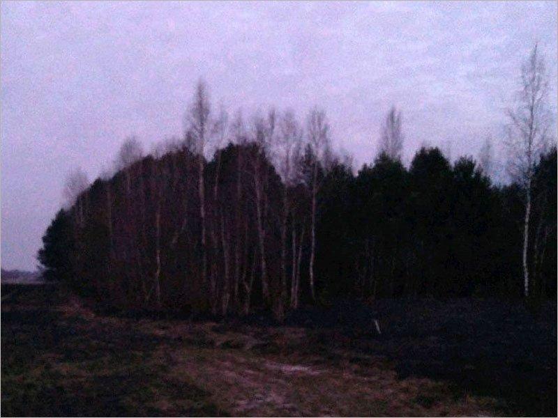На границе Брянска потушен лесной пожар площадью семь гектаров