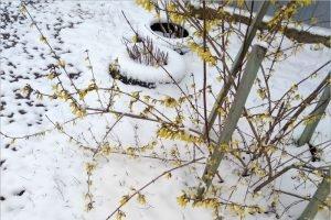 Последний день марта оказался самым снежным днём весны
