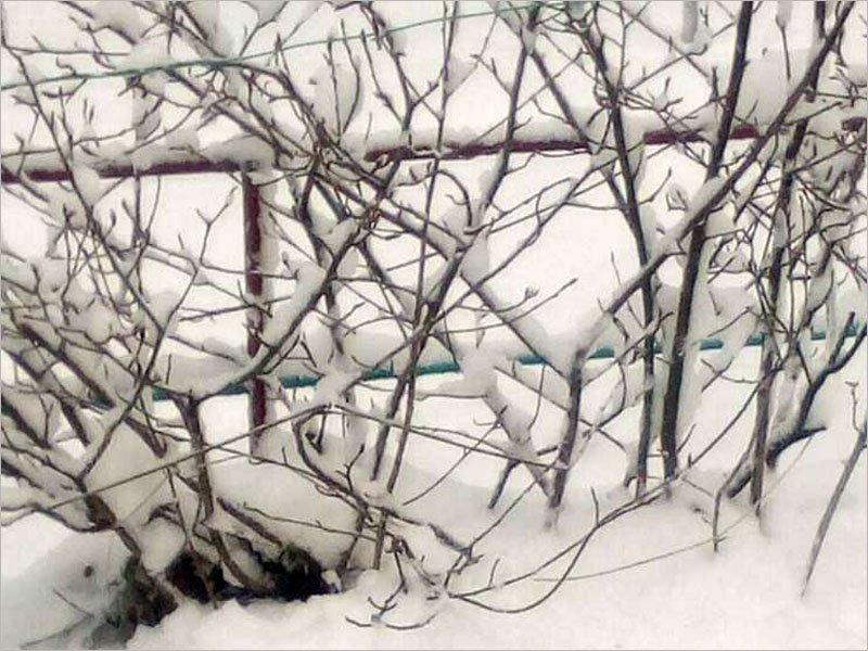 В юго-западных районах Брянской области 22 марта выпал снег