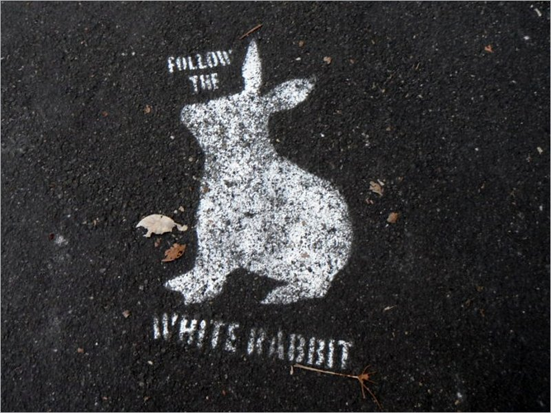 Новая схема кражи денег с банковских карт получила название «Белый кролик»