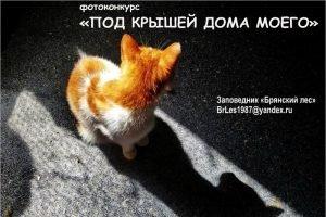 «Брянский лес» объявил «самоизоляционный» фотоконкурс