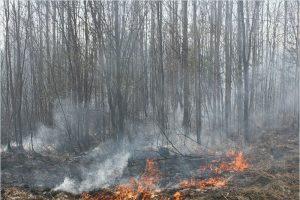 Мглинчанин отправлен под суд за сгоревшую часть заказника «Клетнянский»