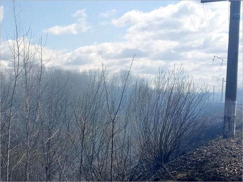 За сутки в брянских лесах потушено больше шести горящих гектаров