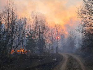 Минприроды прогнозирует весенние лесные пожары в Брянской области
