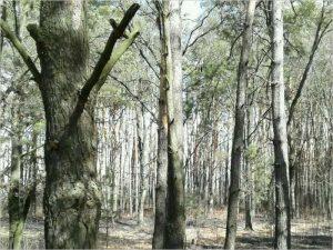 За пятницу в Брянской области произошло 14 лесных пожаров