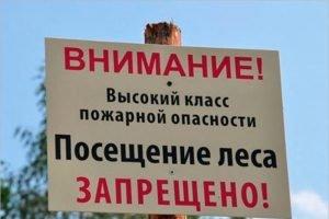 В Брянской области до конца июня введен запрет на посещение лесов