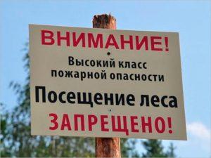В Брянской области введены ограничения на посещение лесов до 5 сентября