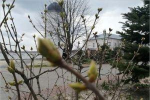 В Свенском монастыре под Брянском неожиданно зацвели цветы