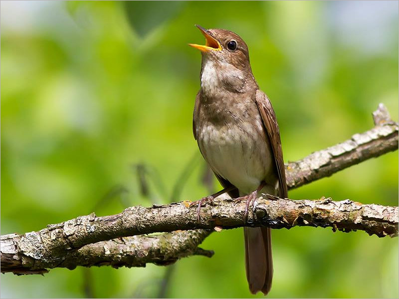 Птицы запели федеральный центр психиатрии и наркологии