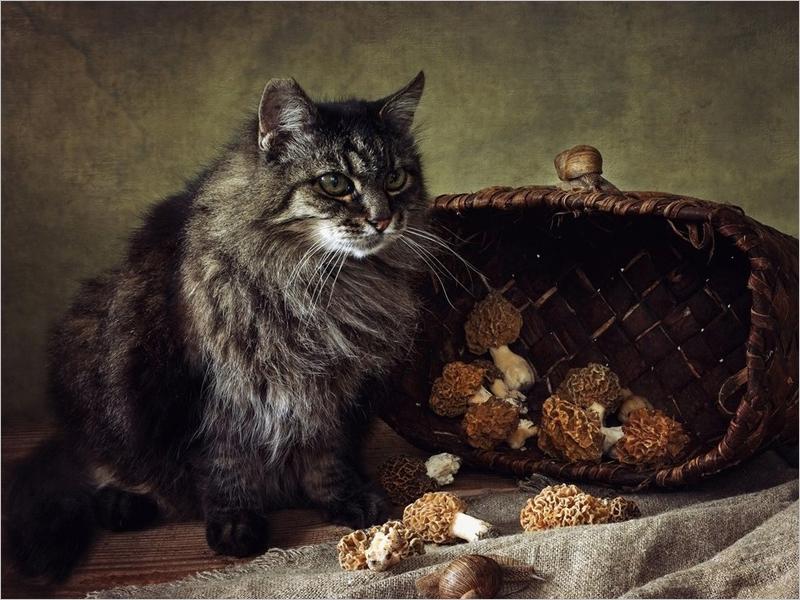 «Кошки — это хорошо»: 1 марта в России отмечается День кошек
