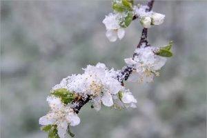 В ночь на 16 мая на Брянскую область обрушатся заморозки