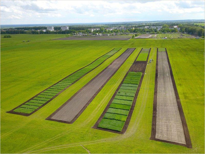 Картофельный рай: на «Дне Брянского поля-2021» будет представлено 128 сортов картофеля