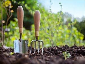 Больше трети дачников увеличили расходы на товары для дачи и сада — создать запасы продовольствия