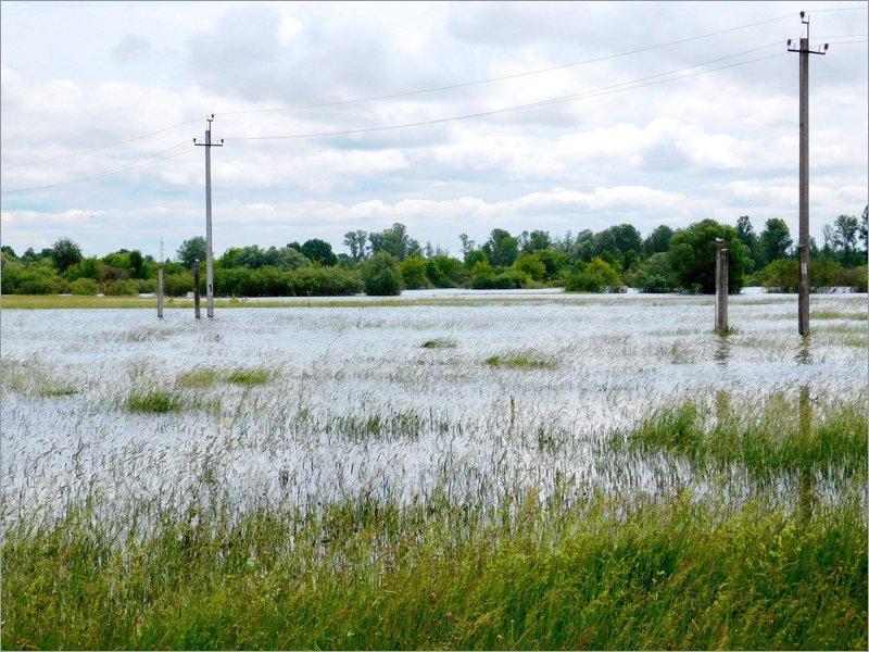 Летний паводок в Брянской области погубил птичье потомство