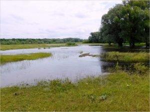 МЧС прогнозирует на 16 июня остановку подъёма уровня воды в брянских реках