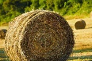 Под Брянском «хозяйственный» сын обеспечил родителей краденым сеном