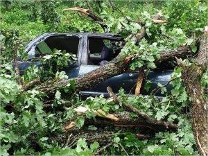 Обещанный синоптиками ураганный ветер ударил по Брянску: дуб рухнул на легковой автомобиль