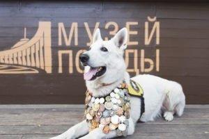 Юным брянским художникам предложили нарисовать собак-героев