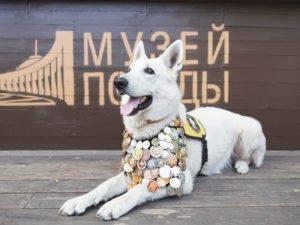 Юные брянские художники ещё могут успеть нарисовать «Портрет фронтовой собаки»