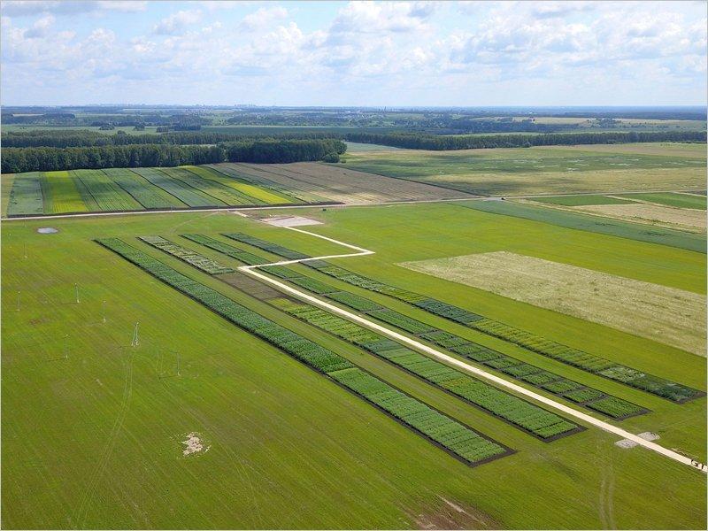 На полях Брянского аграрного госуниверситета начался Всероссийский день поля-2020