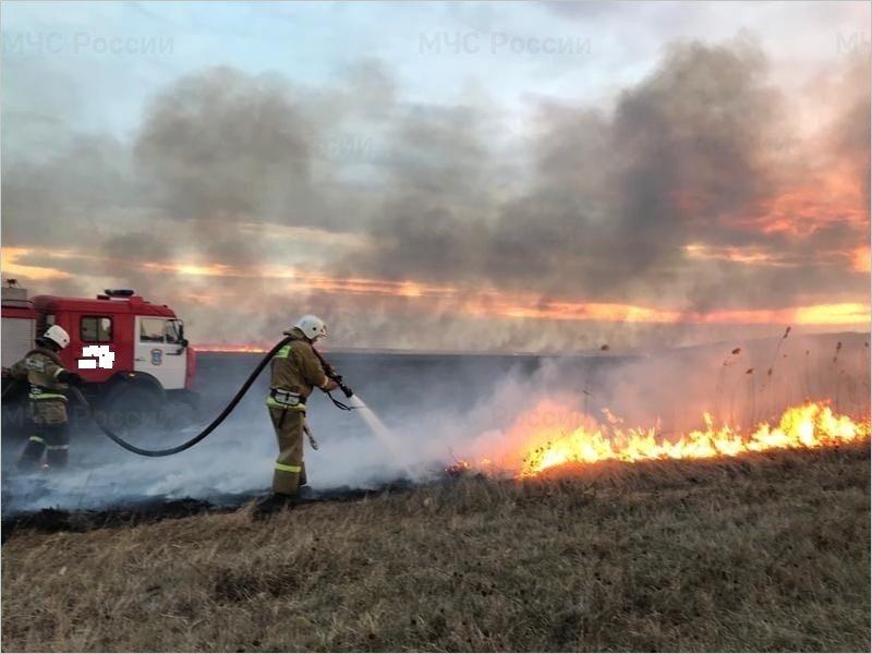 Севские пожарные тушили горящее пшеничное поле