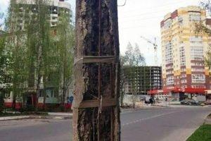 Прокуратура Брянска предъявила претензии к столбам