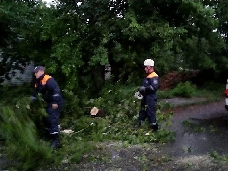 Непогода отключила свет в населённых пунктах Брянской области