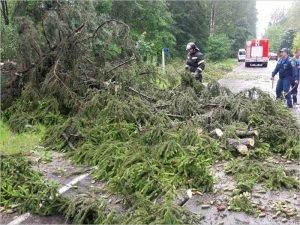 Ураганный ветер повалил в Белых Берегах как минимум 25 деревьев