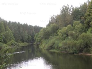 В Жуковке утонул молодой мужчина