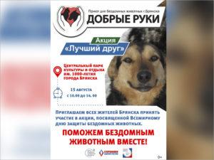 «Лучший друг»: в Брянской области возобновляется акция по поиску новых хозяев для «приютских» собак