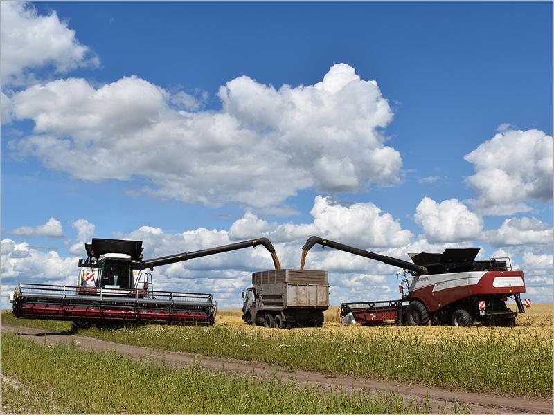 Брянская область удерживает четвёртое место в ЦФО по урожайности зерновых – Минсельхоз