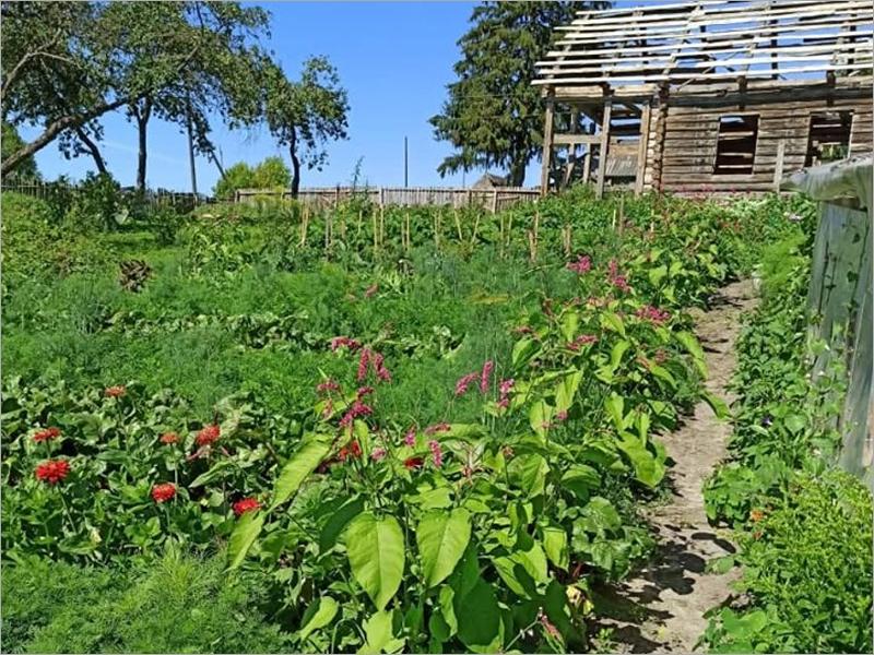 У режиссёра Ларисы Садиловой в Брянской области пора собирать урожай с «Огорода»