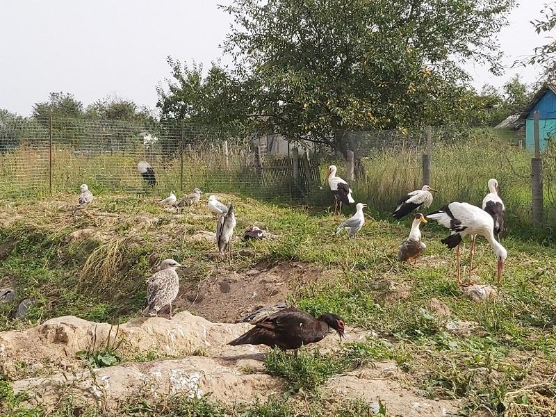 Пернатые подопечные почепского приюта для птиц нуждаются в помощи