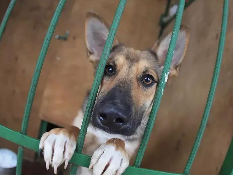 Приют для животных в Брянске застрял на стадии проектирования