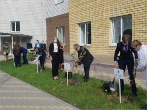 В Фокинском районе Брянска появился яблоневый «Сад памяти»